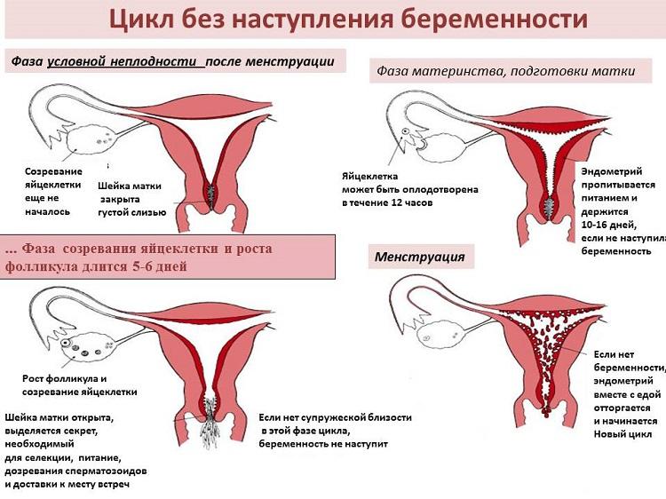 Беременность щекотно в матке