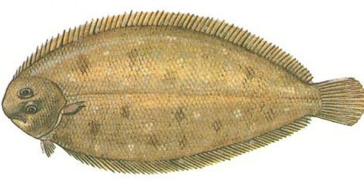 Рыба в кляре пошаговый рецепт с фото: как приготовить.