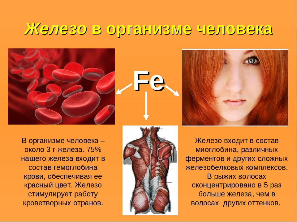 Железо в организме