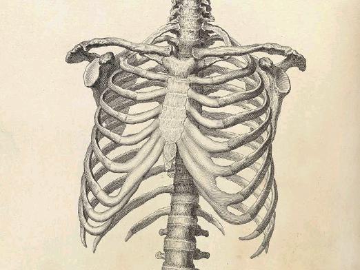 Сколько ребер у человека в грудной клетке || У кого больше ребер