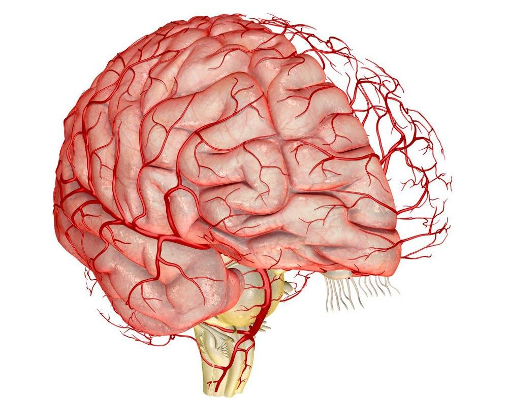 Сильная головная боль в области лба и висков что делать-проблемы с кровотоком