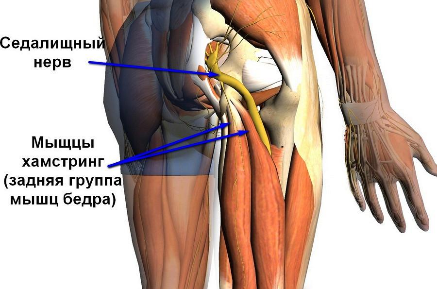 боль в тазобедренном суставе причины и лечение-отдает в ногу