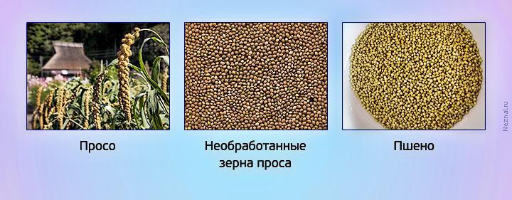 Из чего делают пшено из какого растения