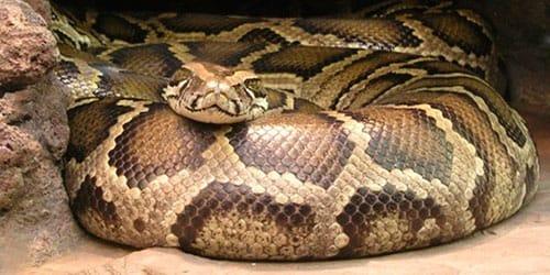 Сонник к чему снятся змеи много мужчине