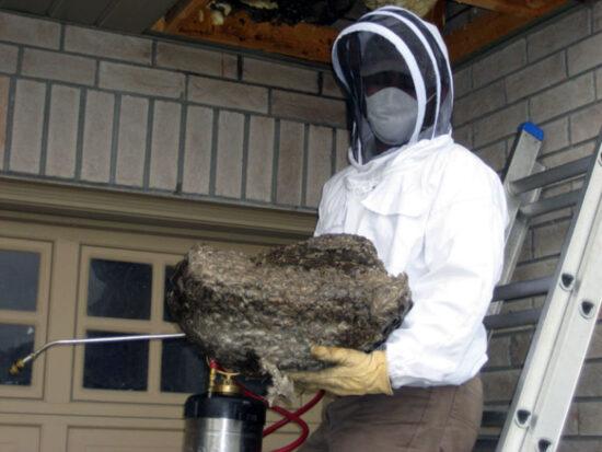 Как избавиться от осиного гнезда